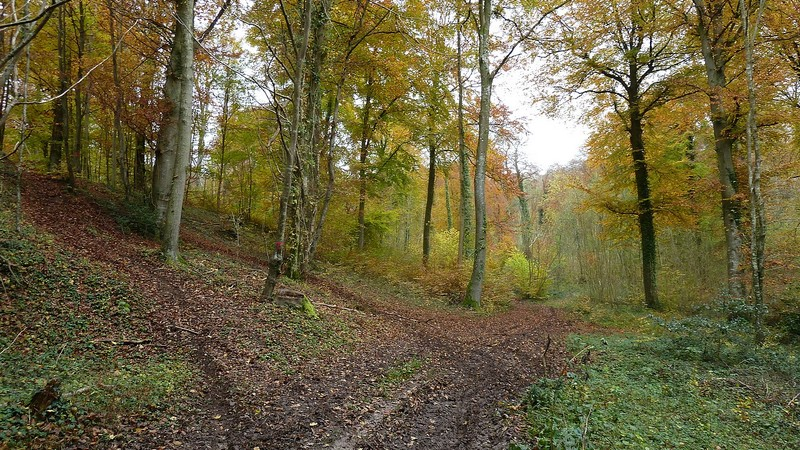 Forêt Domaniale d'HESDIN