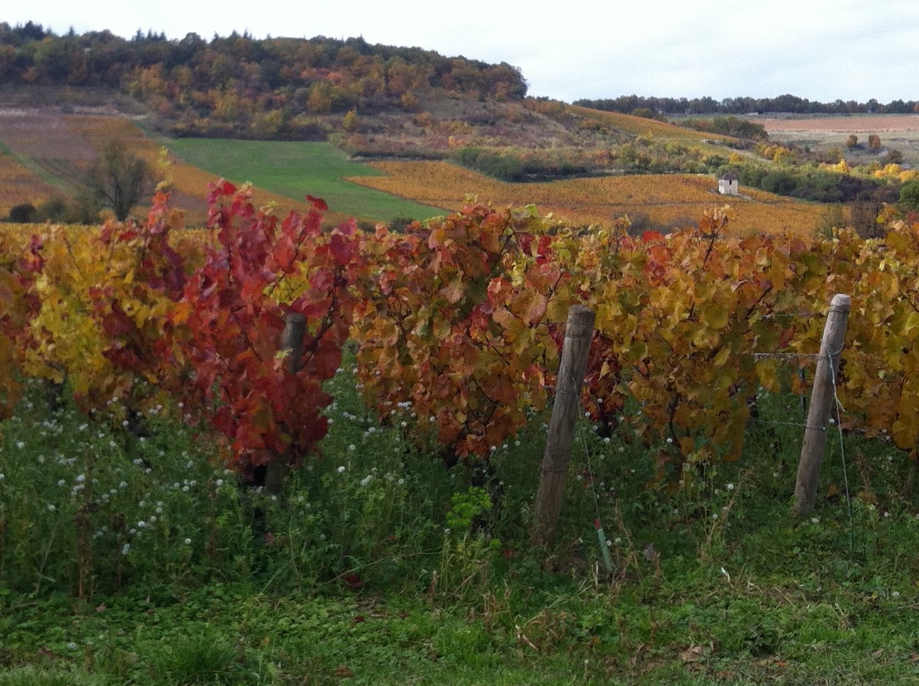 vignes givry notaire