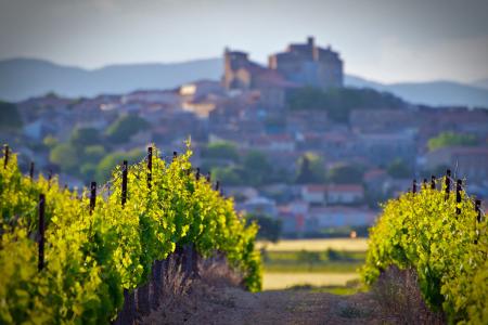vigne-vin-domaine-viticole-cave coopérative-vignoble-forêt- Vidauban